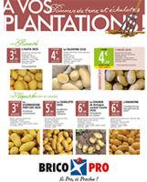 AVP Pommes de terre et échalotes 2017