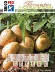 À vos plantations ! Spécial pommes de terre 2019